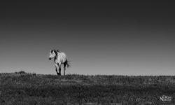 horse-outstanding-in-field