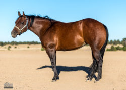 horse-photography-colorado